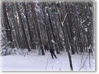 Гонки по лесу. Белорецк